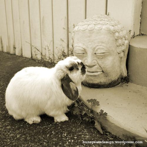 tofu-buddha-new