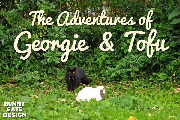 georgie-tofu-blog1