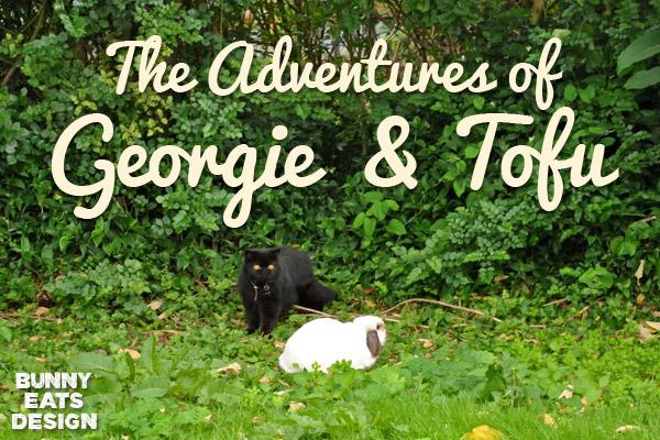 georgie-tofu-blog1