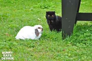 Tofu and Georgie