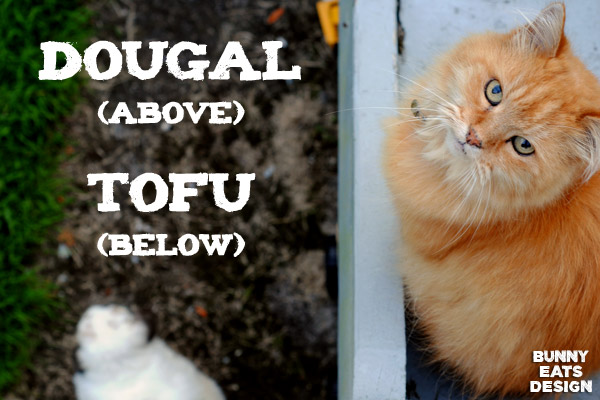 Tofu and Dougal