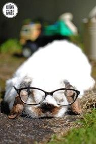 tofu-ck-glasses1