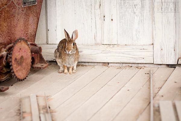 Monday Bunday: Interior Design with Real Bunnies | Bunny