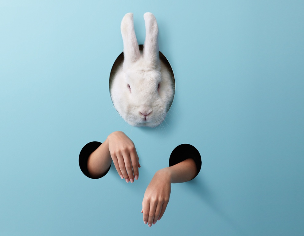 white-rabbit-silo