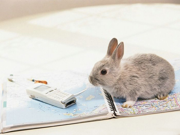 bunny-on-map