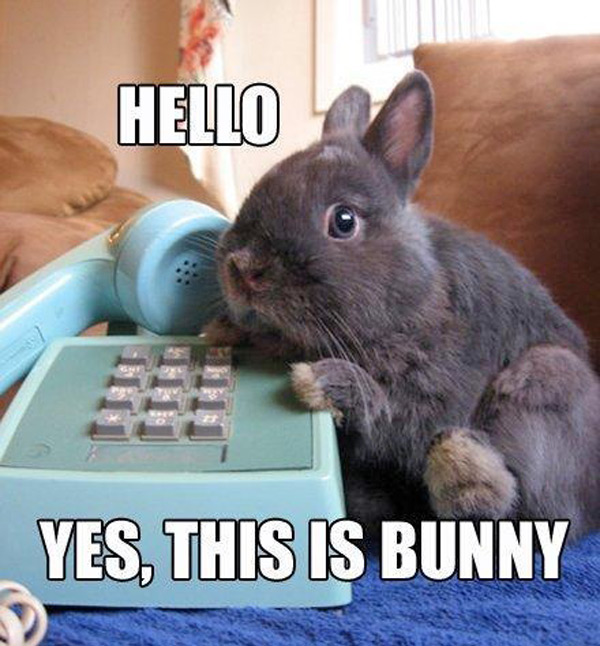 hello-yes-this-is-bunny