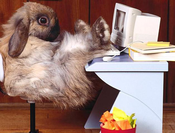 office-rabbit