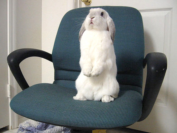 rabbit-on-chair