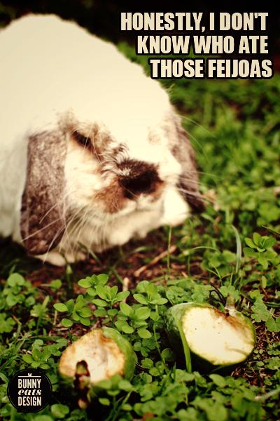tofu-feijoas