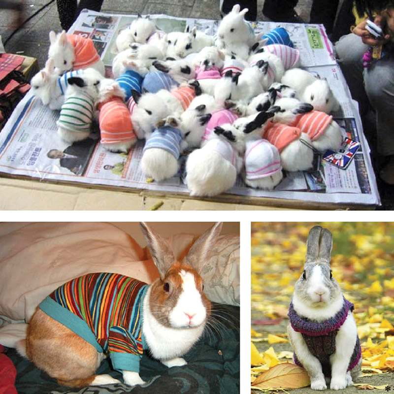 rabbits-in-sweaters