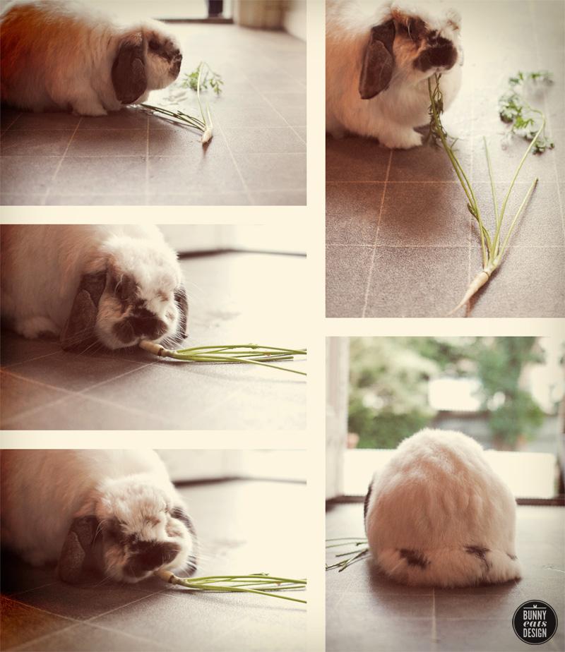 tofu-white-carrot