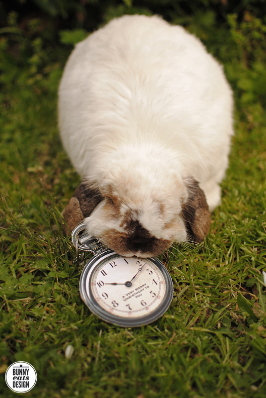 tofu-pocket-watch4