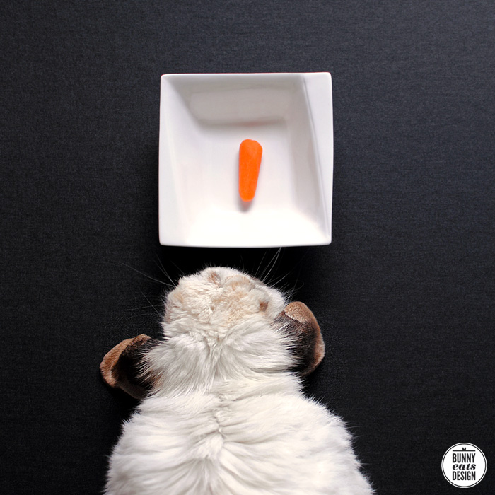 tofu-tiny-carrot