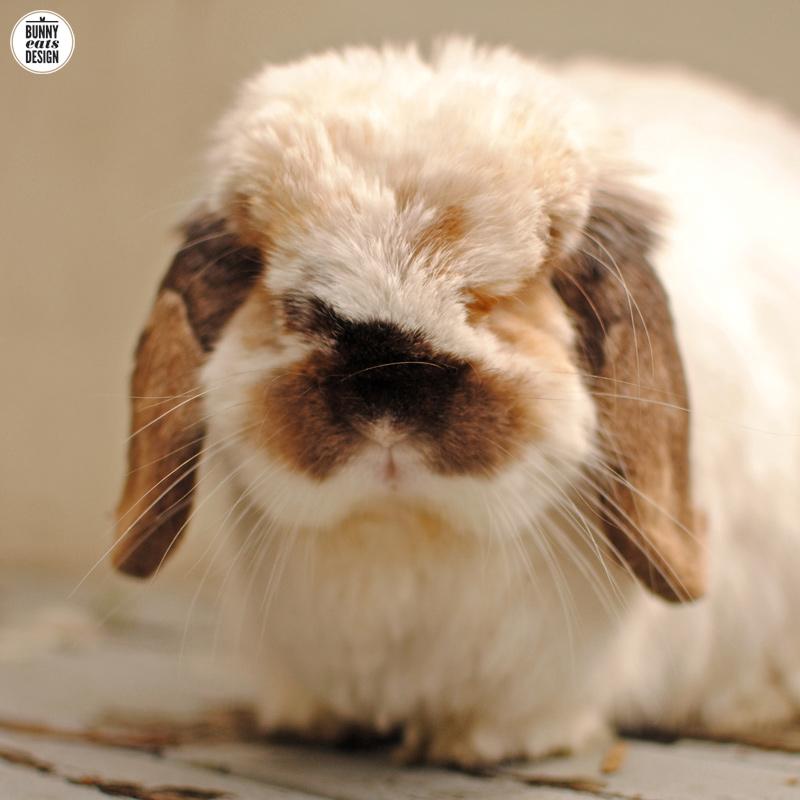 tofu-the-bunny