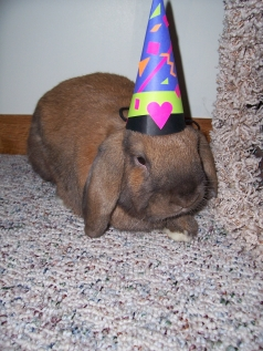 birthday-buns02