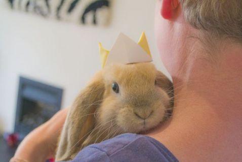 birthday-buns03