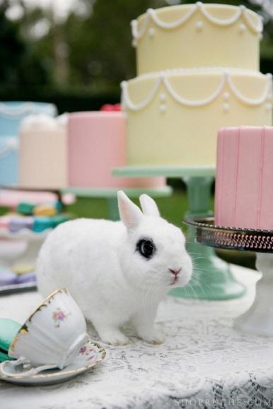 birthday-buns04