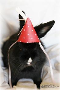 birthday-buns05