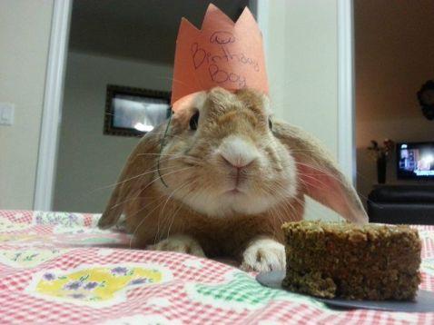 birthday-buns07