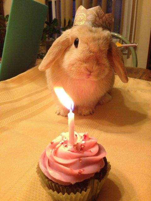 birthday-buns13