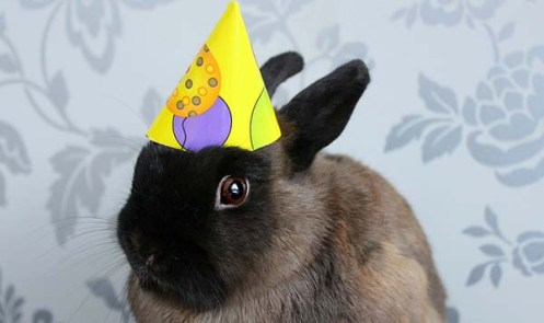 birthday-buns15