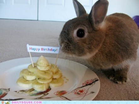 birthday-buns16