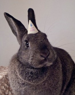 birthday-buns17