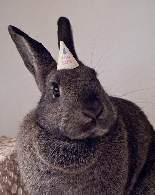 birthday-buns17