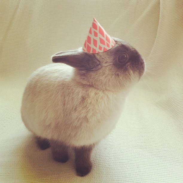 birthday-buns20