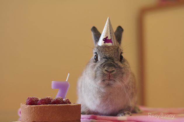 birthday-buns23