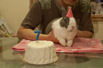 birthday-buns24