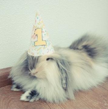 birthday-buns25