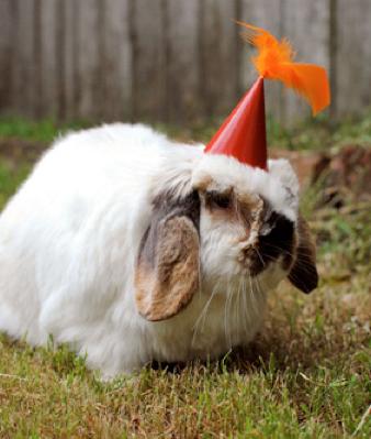 birthday-buns26
