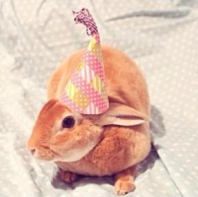 birthday-buns27