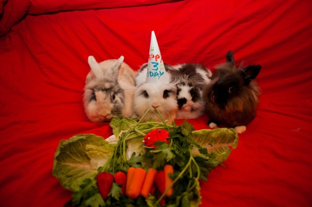 birthday-buns29