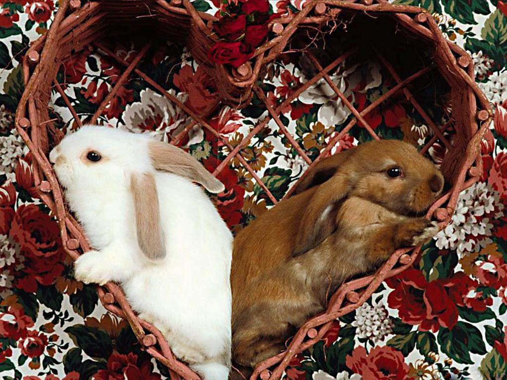 rabbit27_1024x768