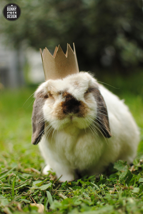 Tofu the bunny wearing a crown
