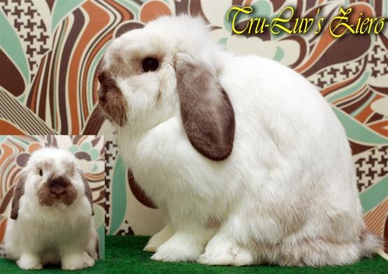Tofu the bunny lookalikes.