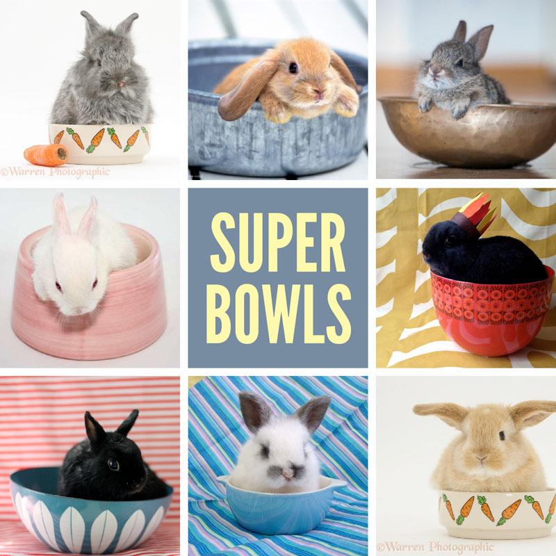 super-bowls