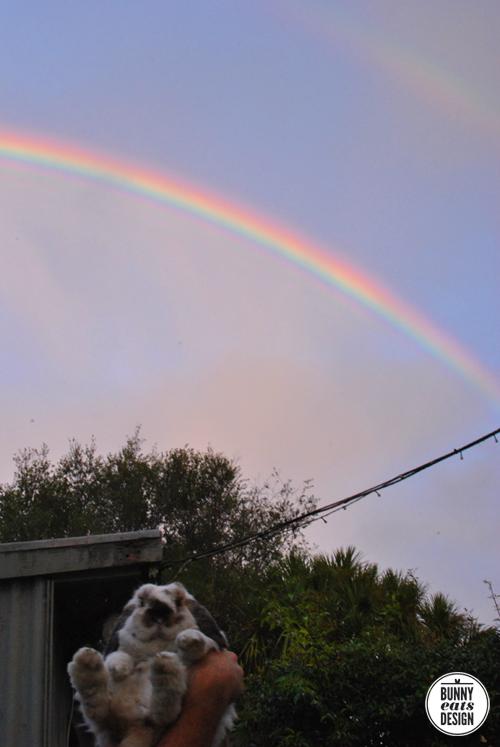 tofu-rainbow1