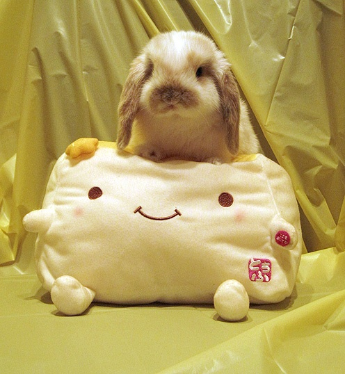 Nomnom the bunny sitting on a tofu plush toy. Mind blown.