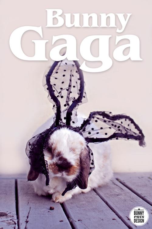bunny-gaga1