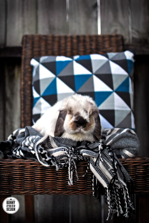 Tofu the bunny with geometric scarf and geometric cushion from Kmart.