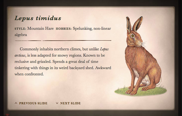 wild-hare5