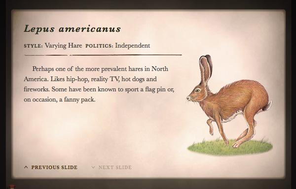 wild-hare6