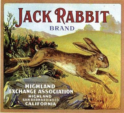 bunny-vintage-11