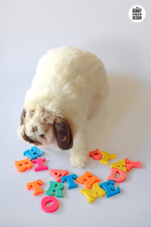 tofu-happy-birthday3