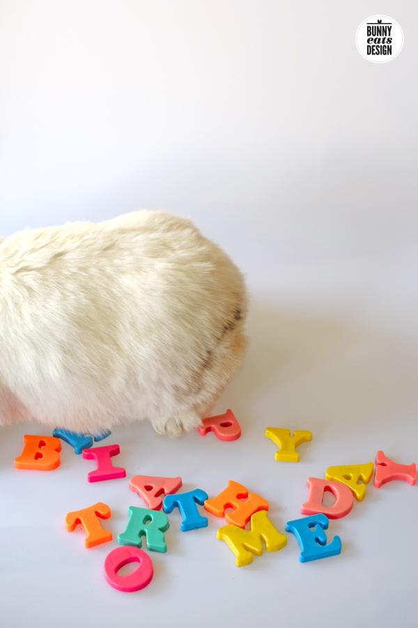 tofu-happy-birthday4
