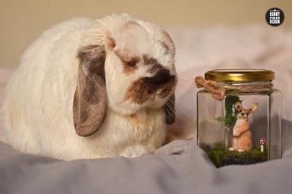 tofu-rabbit-jar1