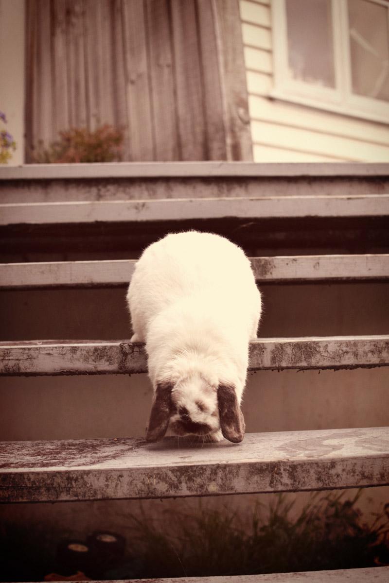 tofu-stairs16